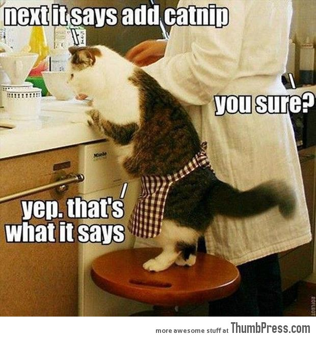 Cooking with Catnip