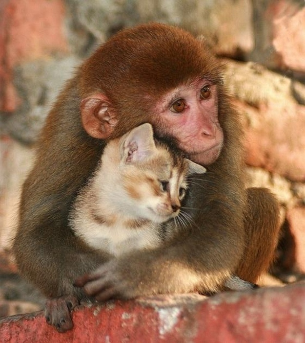Cute animals that know what Love is 16