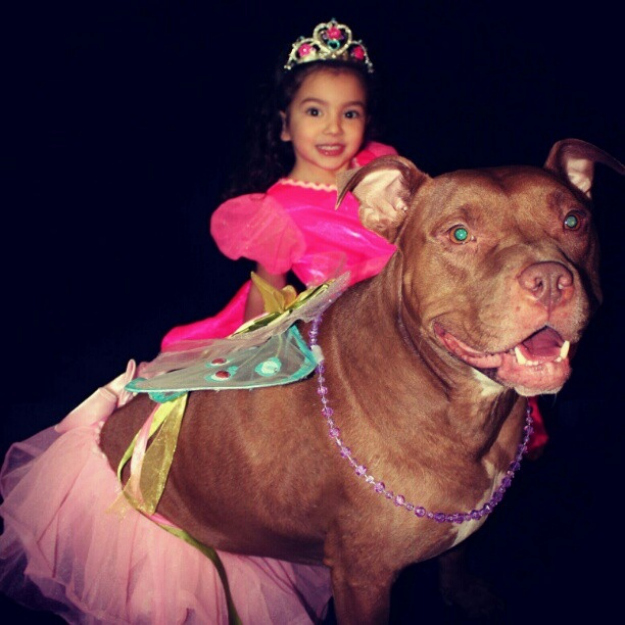 Dog accompany his fairy princess on backyard adventures