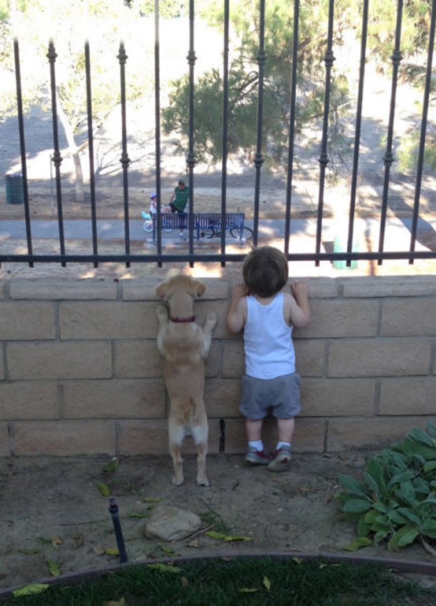 Dog helps spy on the neighbors to catch a glimpse of the girl next door
