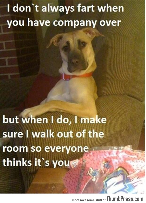 Funny Animal Pictures 23