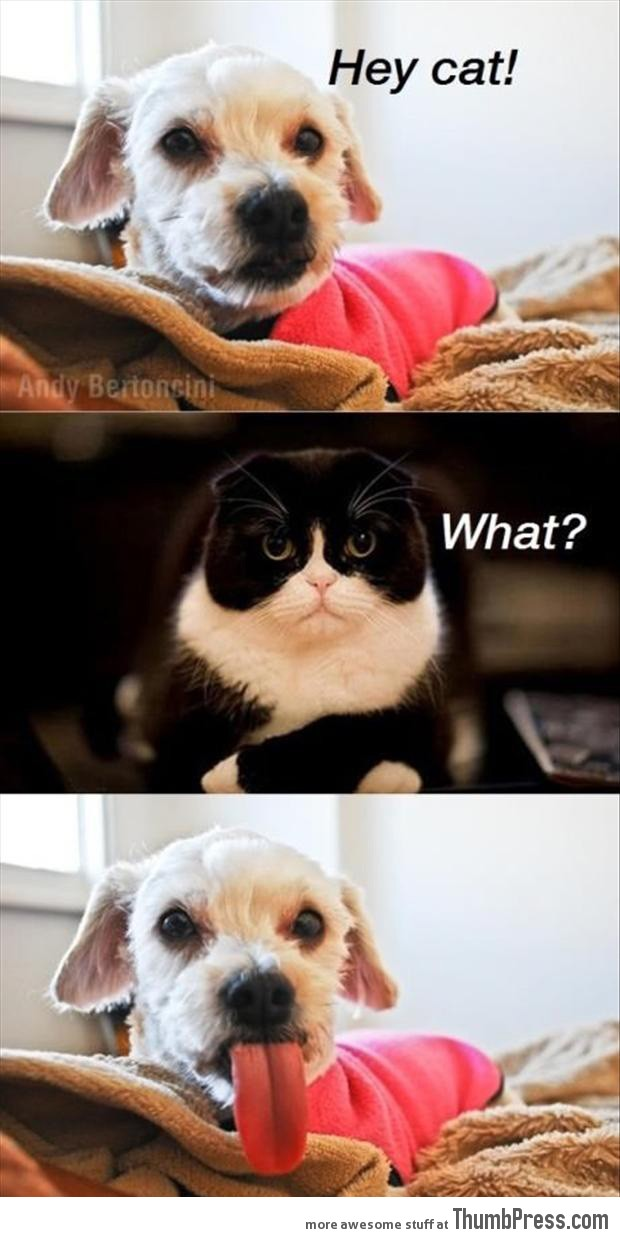 Absolutely Hilarious Pictures Of Animals To Make You Laugh - 18 super adorable animal comics thatll make your day