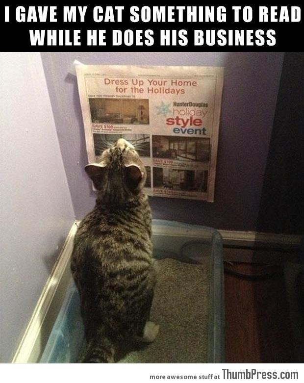 Funny Animal Pictures 37