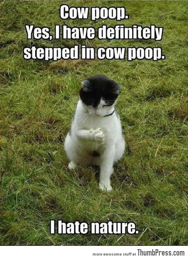Funny Animal Pictures 8