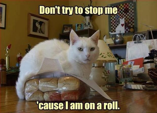 Funny Cat Pictures with Captions 13