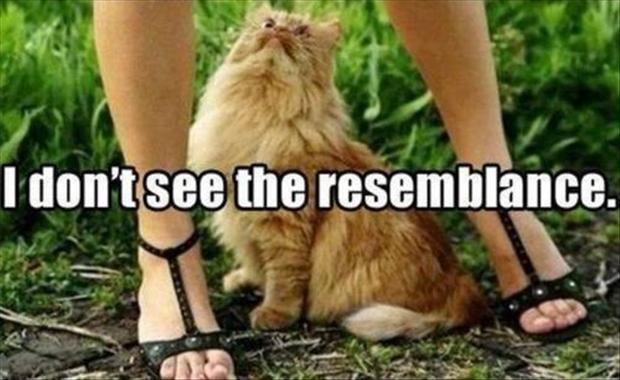Funny Cat Pictures with Captions 15