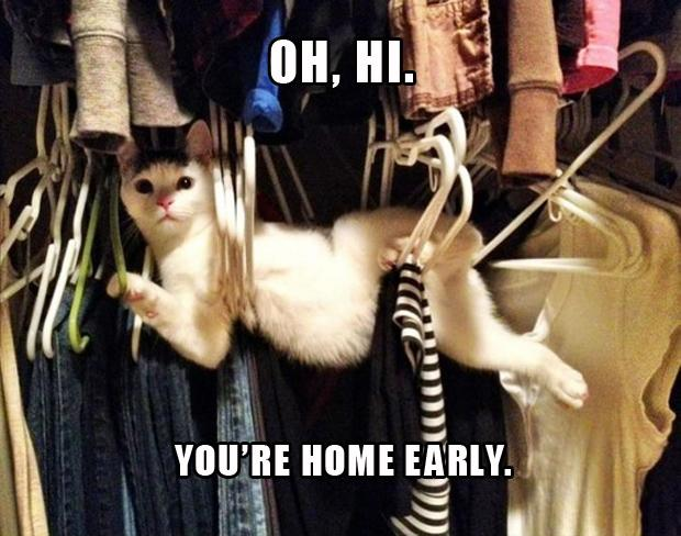 Funny Cat Pictures with Captions 19