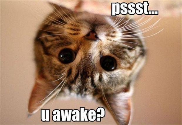 psst you awake funny cat