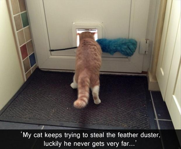 Funny Cat Pictures with Captions 30