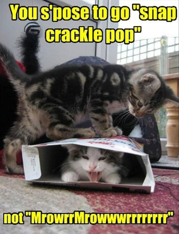 Funny Cat Pictures with Captions 43