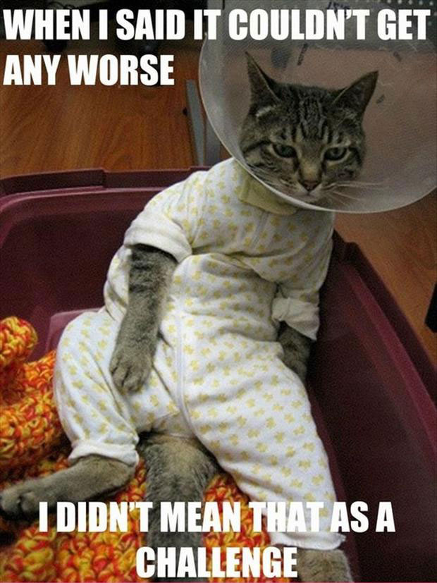 Funny Cat Pictures with Captions 45