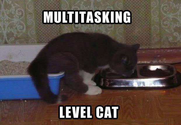 Funny Cat Pictures with Captions 47