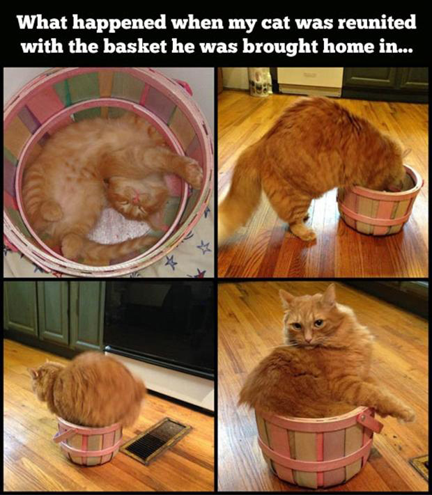Funny Cat Pictures with Captions 7