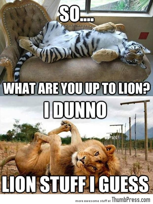 So, what are you upto lion.