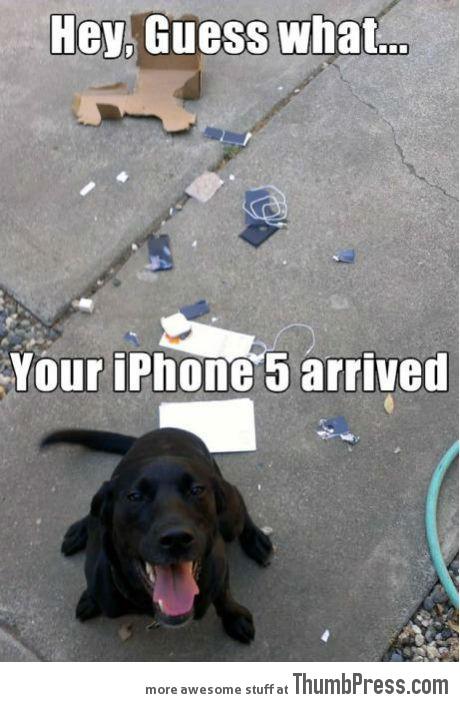Thanks dog...