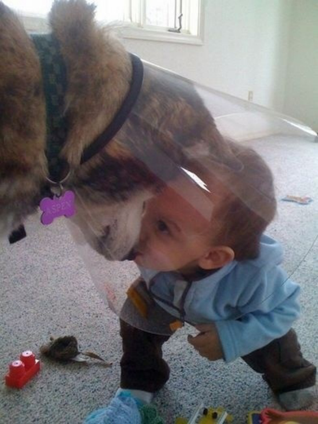 This dog embrace the cone of shame to have secret meetings with the tiny human