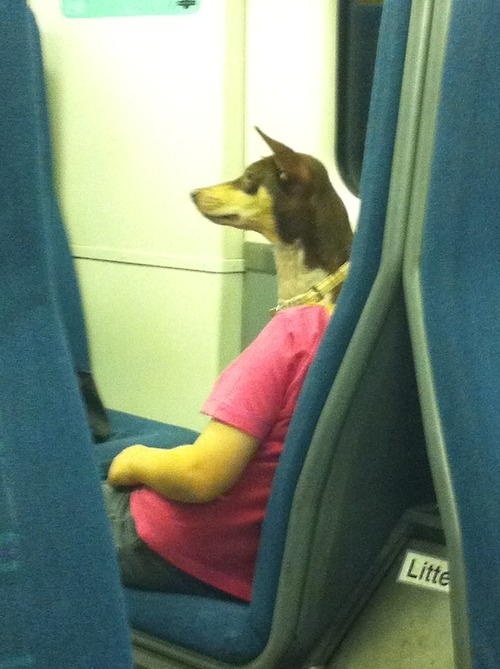 This is not a dog politely riding the train to work.