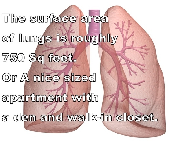 Amazing Facts About Human Body 9