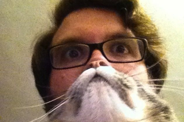 hilarious pet owners take photos with cat beards 10 pics