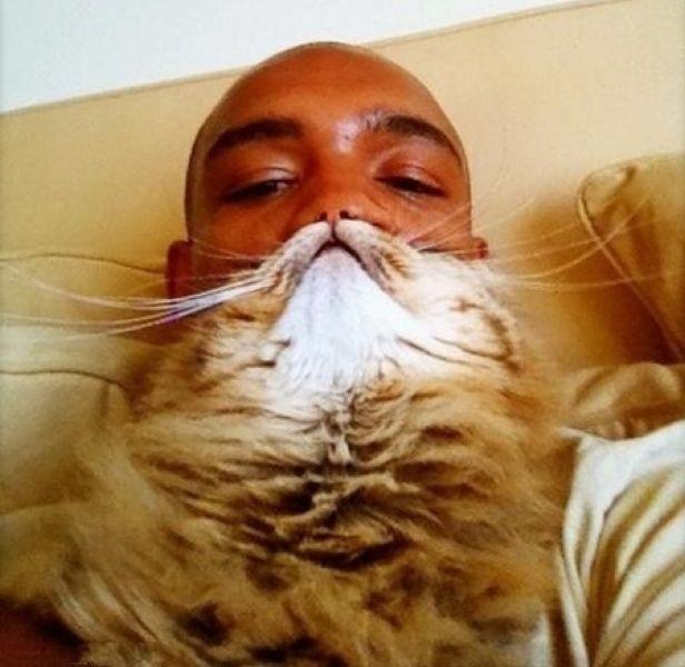 Cat Beards 10