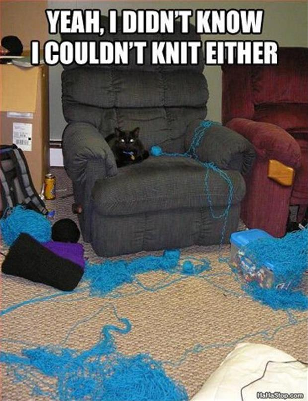 Cat Knitting Meme : Cat playing with yarn