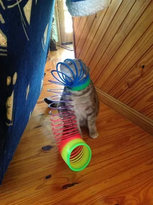Cats Doing What They Do Best, Getting Stuck in Things — 6
