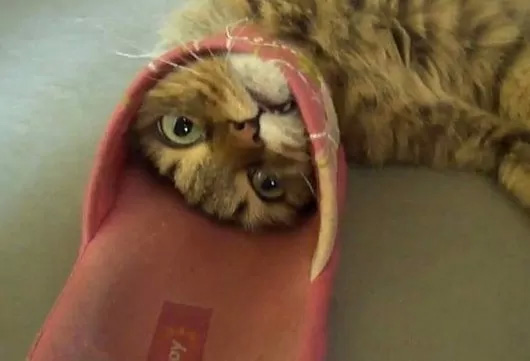 Cats Doing What They Do Best, Getting Stuck in Things — 9