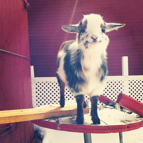 Cute Animal Pictures To Help You Deal With Monday 13