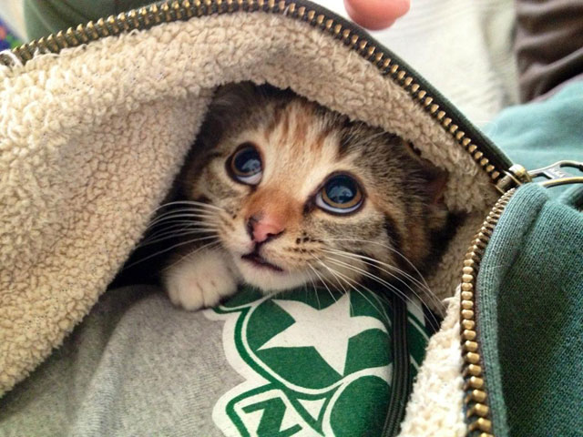 Cute Animal Pictures To Help You Deal With Monday 5