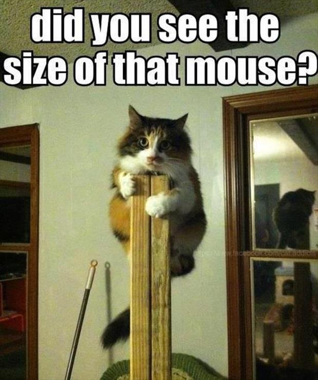 Did you see the size of that mouse?