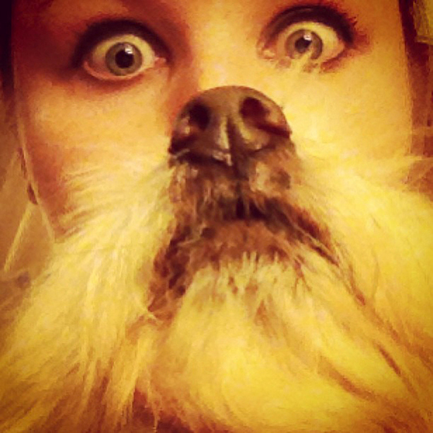 Forget Cat Beards Quot Dog Bearding Quot Is The Latest Internet