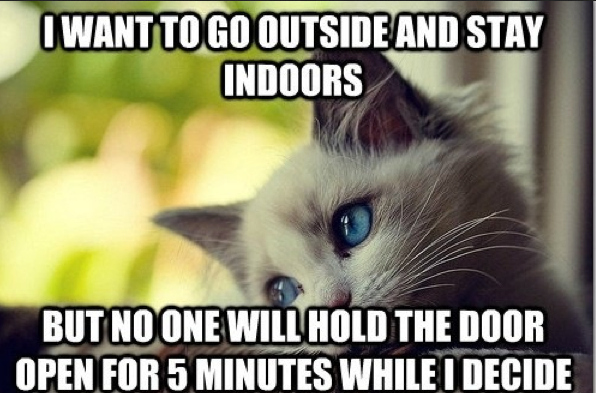 First-World Cat Problems 1