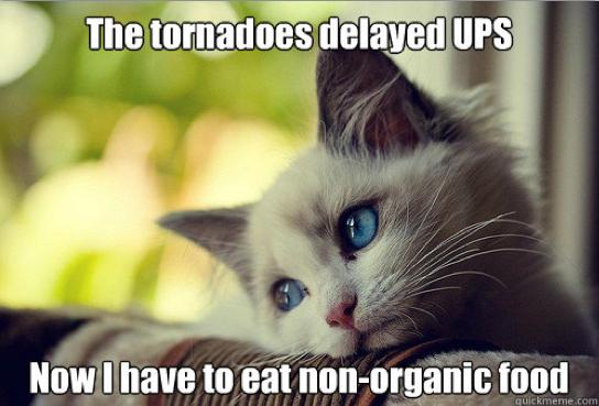 First-World Cat Problems 10