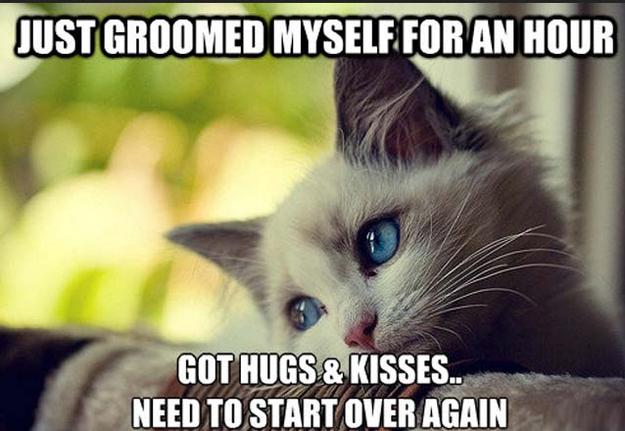 First-World Cat Problems 16