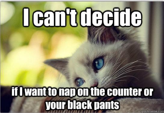 First-World Cat Problems 19