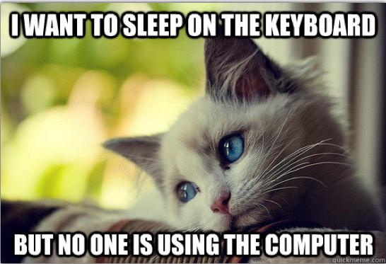 First-World Cat Problems 2