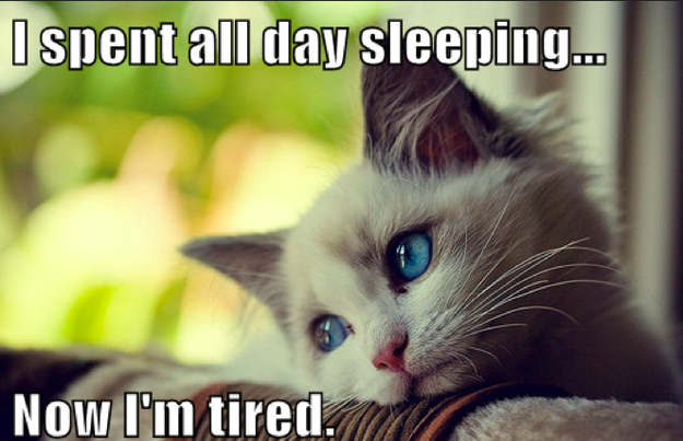 First-World Cat Problems 3