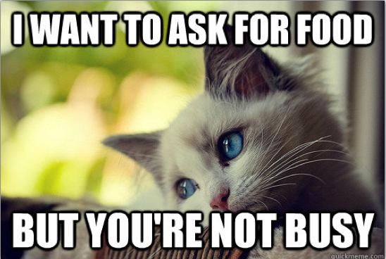 First-World Cat Problems 7