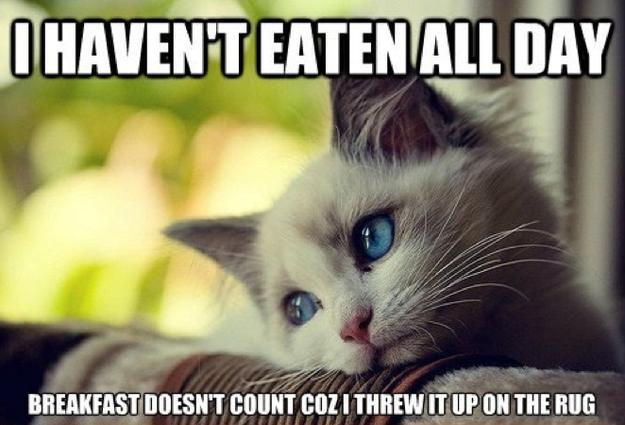 First-World Cat Problems 8