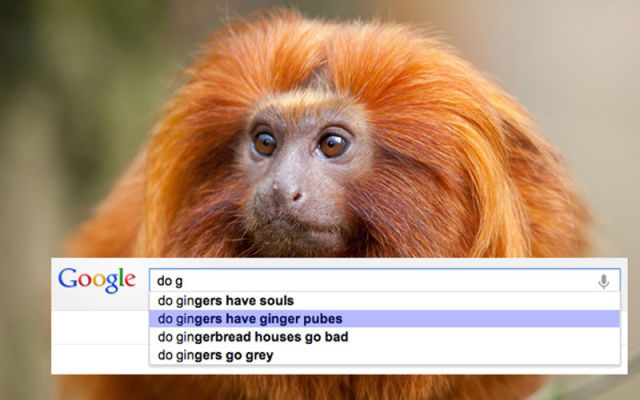 Funny Google Search Suggestions 2