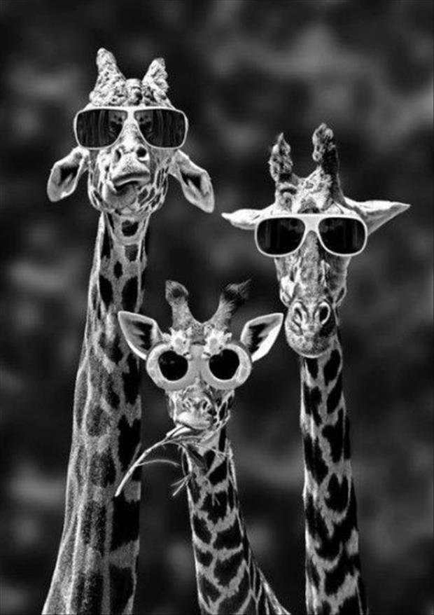 Funny Sunglasses
