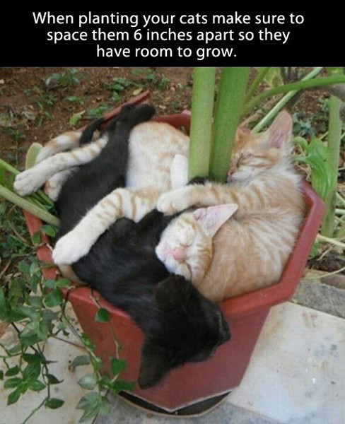Good advice for next year's kitten crop.