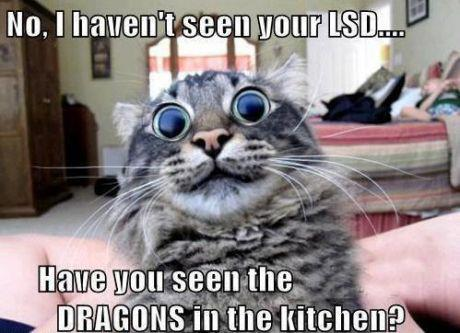 Have you seen those dragons