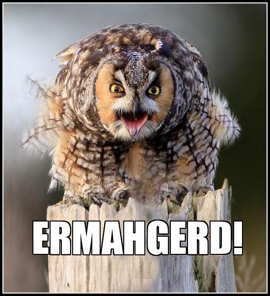 Hilariously Adorable Owl Memes 1