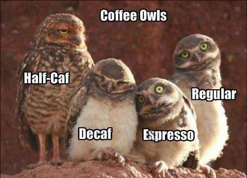 Hilariously Adorable Owl Memes 12