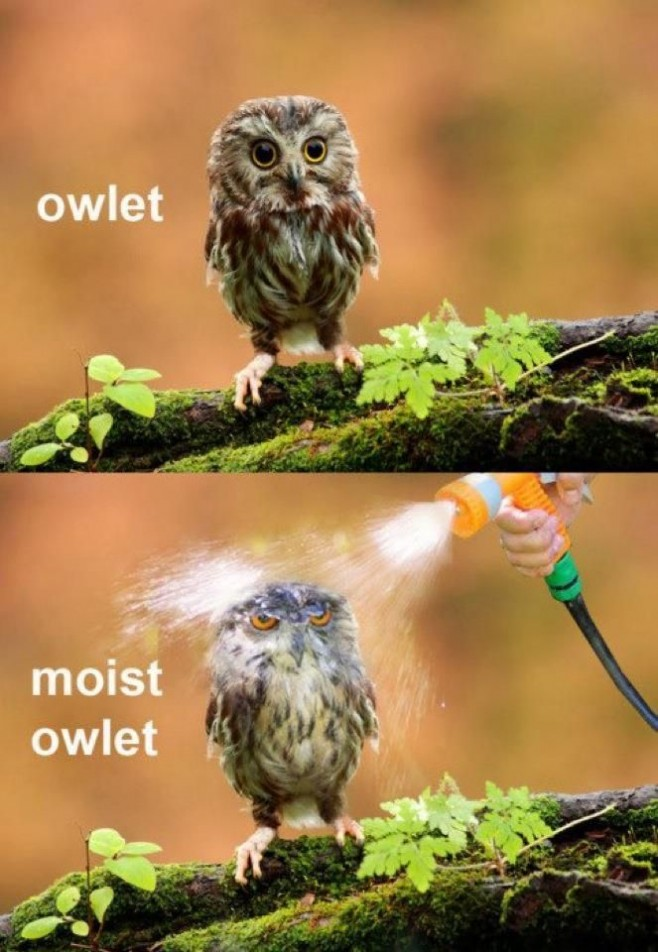 Hilariously Adorable Owl Memes 16