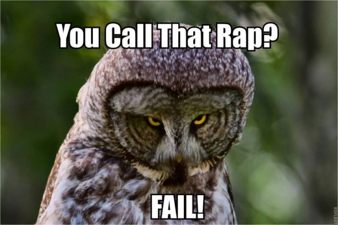 Hilariously Adorable Owl Memes 4