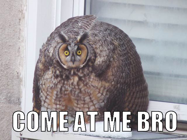 Hilariously Adorable Owl Memes 7