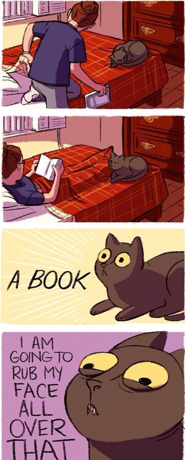 How cats see books...