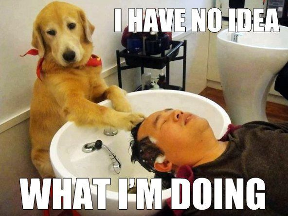 30 dogs who have no idea what they u0026 39 re doing